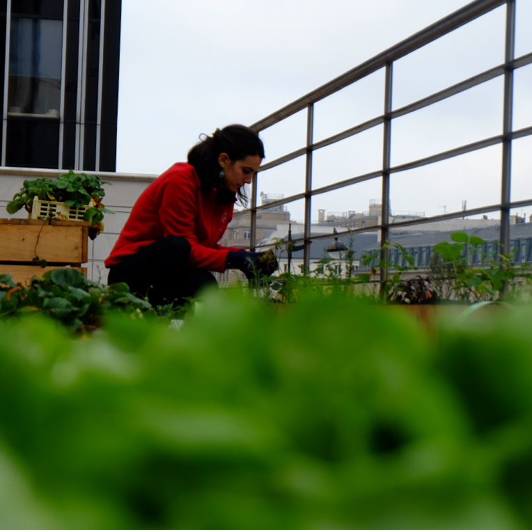 P-Agriculture-urbaine-LYBY-vignette