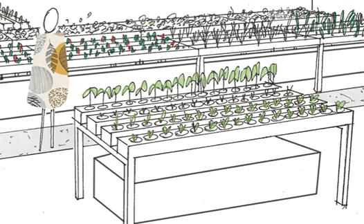 Aeromate, Agriculture urbaine, hydroponie