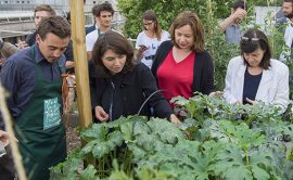 Inauguration Parisculteurs, agriculture urbaine, hydroponie